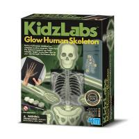 Набір для експериментів 4М Светящийся скелет человека Фото