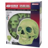 Пазл 4D Master Объемная анатомическая модель Череп человека светя Фото