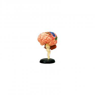 Пазл 4D Master Мозг человека Фото