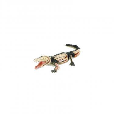 Пазл 4D Master Объемная анатомическая модель Крокодил Фото 1